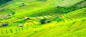 Bac Ha - Vietnam 02
