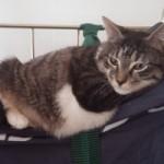 Dormez avec votre chat à l'hôtel