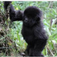 Rwanda dans Afrique