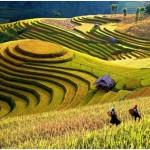 Meilleure période pour partir au Vietnam