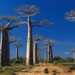 Le Ngorongoro : une destination incontournable en Tanzanie