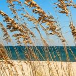 Location la Couarde sur mer – vacances de rêves
