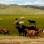 5 lieux à découvrir lors d'un voyage en Mongolie