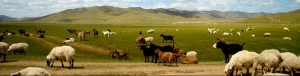 Voyage Mongolie1