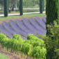 La route des vins  rosés  de Provence  4 jours