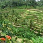 Un itinéraire de voyage à Bali vivement recommandé