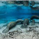 Deux merveilleux spots de plongée aux États-Unis