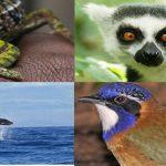 Visiter Madagascar, les réponses à vos questions