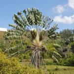 Que faut-il savoir avant de partir à Madagascar ?