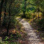 Promenades en forêt de Brocéliande, une parenthèse enchantée…