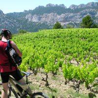 L'œnotourisme : une opportunité pour découvrir de grands vignobles