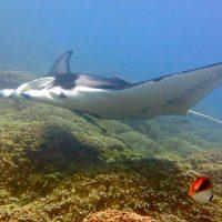 Plonger en Polynésie Française, le paradis du « gros »