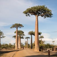 Obtenir sa carte de résident à Madagascar